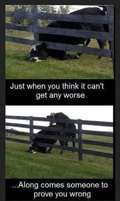 cow stuck fence gets fucked from behind sexy humor funny life sucks Haha Funny, Funny Shit, Funny Jokes, Hilarious, Funny Stuff, Funny Pranks, Farts Funny, Funny Life, Funny Things