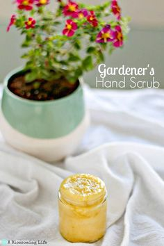 Super nourishing DIY hand scrub is the perfect way to exfoliate and moisturize cracked hands. Olive oil, shea butter, and vitamin e are combined to make the best scrub for dry hands. #ablossominglife #diyhandscrub #handscrub #gardenershandscrub Dry Cracked Hands, Dry Hands, Kitchen Recipes, Cooking Recipes, Easy Homemade Gifts, Homemade Scrub, Homemade Spices, Hand Scrub, Peeling