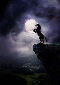 Wild Rearing Mustang High on a Rock With Moonlight