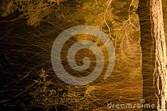 Fire In Forest - Download From Over 30 Million High Quality Stock Photos, Images, Vectors. Sign up for FREE today. Image: 49612239