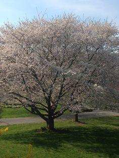 Spring in full bloom
