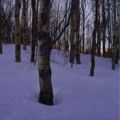 Winter Aspens - Giclee Print by Chris Young
