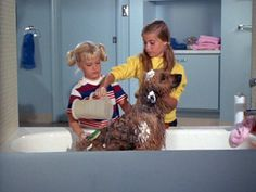 1st season the dog tiger gets a bath from everyone cause they believe jan is allergic to him Bing Images