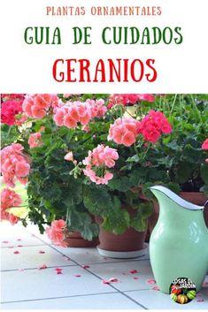 Geranium Care Tips - All About Geranium Care, Geranium Plant, Organic Gardening, Gardening Tips, Orquideas Cymbidium, Amarillis, Companion Planting, Garden Crafts, Garden Ideas