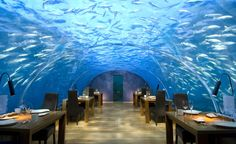Would be so fun to have dinner under the sea! :)