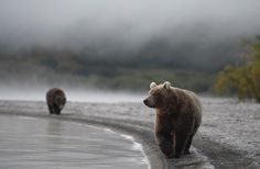 """nature-madness: """"In A Fog…"""" by Igor Shpilenok"""