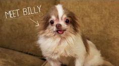 Heartwarming Rescue Video Will Make You Cry! Meet Billy, Rescued From a Puppy Mill | Chill