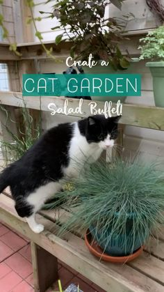 Cat Safe Plants, Cat Plants, Cat Friendly Plants, Cat Garden, Garden Oasis, Cat Fountain, Outdoor Cat Enclosure, Chesire Cat, Cat Grass