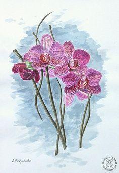 Орхидеи, акварель, бумага, 29,7х21см. Watercolor phalaenopsis painting, paper, 29,7x21. Watercolor orchid phalaenopsis. Botanical art. #акварель #орхидеи