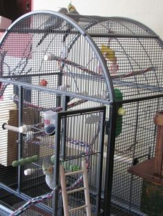 Setting up a wire house for your little feathered friends