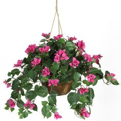 Bougainvillea Hanging Basket Silk Plant - Want to add a touch of decorative spice to your home? Well, this carefully crafted South American bougainvillea hanging basket will do just that, and is sure to be a hit among family and friends. Three delicate pastel petals surround a mix of tiny cream colored flowers. Lush alternating ovate leaves are a nice compliment to this otherwise feminine styled arrangement. Long cascading vines extend gracefully around a traditional wicker planter. Number…