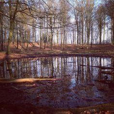 instathilde i skoven