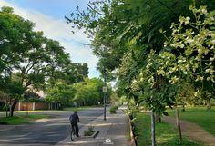 vista parcial del parque Eva hajduk enero 2020 Sidewalk, January, Buenos Aires, Parks, Summer Time, Walkway, Walkways