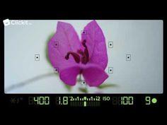 Fotografie voor beginners: scherpstellen - YouTube