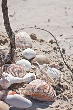 At the #Beach you can go #beachcombing for shells, glass or other little treasures.