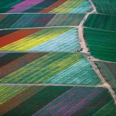 Arial view of California flower farms.