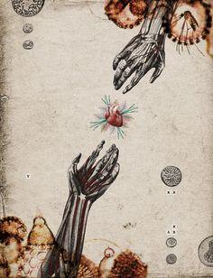 Biological Web by Randy Mora