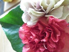 anjers in de woonkamer (2) Rose, Flowers, Plants, Floral, Roses, Plant, Royal Icing Flowers, Florals, Flower