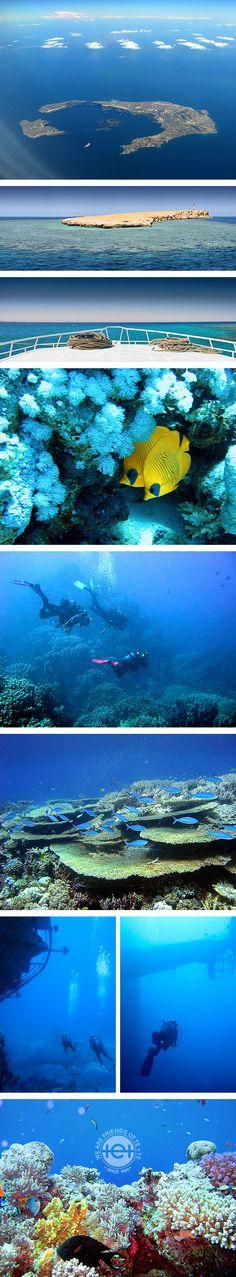 Ein Ausflug in die Tiefen des Meeres, dort wo sich schier unendliches Blau in alle Richtung ausbreitet – hier unten herrschen eigene Gesetze: Das gilt für Farben, Formen, Verhalten und Bewegungen. Als Mensch ist einem diese Umgebung anfangs fremd, doch passt man sich dieser an, offenbart sich einem eine neue und wunderbare Welt!