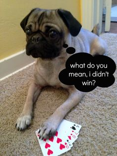 pug poker. bowie isn't so good