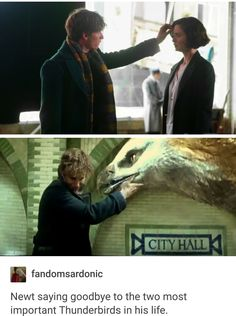 Harry Potter Universe, Harry Potter Love, Harry Potter Fandom, Harry Potter Memes, Harry Potter World, Fandoms, Dr Who, Gellert Grindelwald, Fantastic Beasts And Where