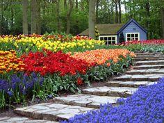 Flowered walkway Garden Wallpaper, Flower Wallpaper, Amazing Gardens, Beautiful Gardens, Beautiful Homes, Garden Pictures, Garden Photos, Calla, Beautiful Flowers Garden