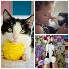 Beautiful Beautiful kitty.