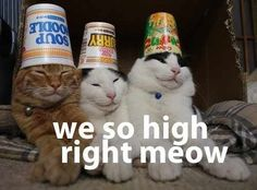 But all your friends seemed to be doing it at parties. | Your First Time Getting High, As Told By Cats