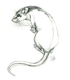 Hooded Rat by aseraph
