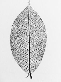 Leaf Print, Leaf skeleton print from Rubber Tree. Original hand pulled leaves print, 9x12 inches by LintonArt on Etsy https://www.etsy.com/listing/486434359/leaf-print-leaf-skeleton-print-from