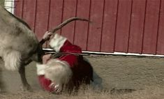 santa-fight-rudolph-red-nosed-reindeer-doesnt-want-to-work-on-christmas.gif 450×272 pixels