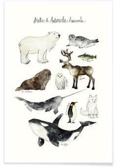 Arctic and Antarctic Animals als Premium Poster von Amy Hamilton | JUNIQE