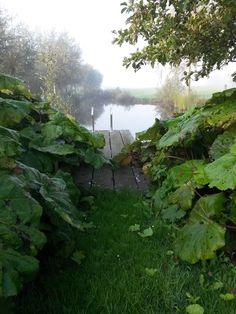 Groenpartners heeft in deze tuin een natuurlijk zwemwater gerealiseerd, door gebruik te maken van het aanwezige water. Gardening, Water, Plants, House, Gripe Water, Home, Lawn And Garden, Plant, Homes