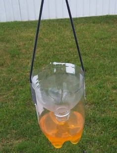 Get rid of wasps, flies and bees! Just cut a 2 liter bottle in half as shown and pour extra sugary kool aid in the bottom. Once they fly in, they cant get out