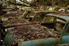 Coches clasicos de lujo abandonados al bosque