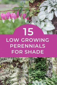 Plant these shade-loving #perennial ground cover plants under bushes and trees to help prevent weeds from growing and add some beautiful flowers to your garden. | Shade Perennials Perennial Bushes, Hardy Perennials, Flowers Perennials, Shrubs, Partial Shade Perennials, Long Blooming Perennials, Perennial Ground Cover, Ground Cover Plants, Shade Flowers