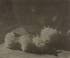 [White Chrysanthemums]; George H. Seeley (American, 1880 - 1955); 1914; Gum bichromate print; 44.6 x 53.8 cm (17 9/16 x 21 3/16 in.); 84.XP.462.3; Copyright: Status undetermined