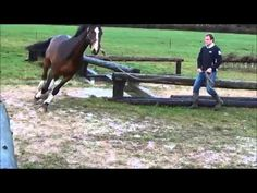 Vendi - Teaching horse X-Country video - He looks like he is having so much fun!  @Tracey Peck  Check it out
