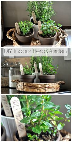 Indoor Herb Garden Ideas 10 indoor garden ideas to cure the winter blues | lush, backyard