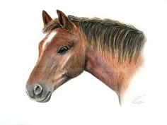 Soft pastels, I created this as a gift to an elderly man with a lifelong love of horses. This particular horse is named Rusty, and was adopted by the elderly gentleman from Redwings horse sanctuary. The recipient had adopted Rusty since he had arrived at the sanctuary almost 30 years ago! He was absolutely delighted to have him at home with him. For your own personal piece of your four legged friend, please contact abigail.rose06@gmail.com or visit www.facebook.com/abigailrose.equineart