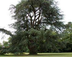 chartreuse jaunay clan - Recherche Google