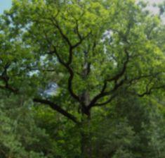 Baumkronenweg Ziegelwies