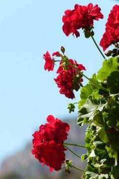 Pesto, Plants, Planters, Plant, Planting