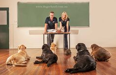 Off- Leash K9 Training puts you at ease in training your dogs because we are the best Portland Dog Trainers . We have an awesome team of professional dog handlers who can transform a dog very efficiently.