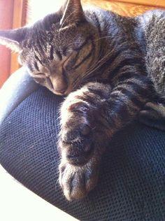 Sleeping beauty cat