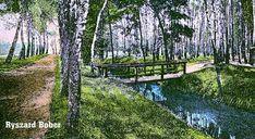 Oleśnica na prawym brzegu potoku Olesnickiego Trunks, Plants, Drift Wood, Tree Trunks, Plant, Planets