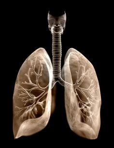 """When the word """"lung"""" is heard, an image of the front of our chest immediately comes to mind.  Our lungs actually run deeper and are mostly on our backsides. By learning to invite the breath into our backside we can rejuvenate the entire body. Artwork by James Archer"""