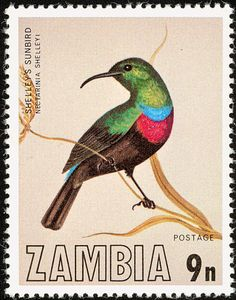 Shelley's Sunbird stamps - mainly images - gallery format