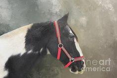 Gypsy Horse, Horses, Red, Animals, Animales, Animaux, Animal, Animais, Horse