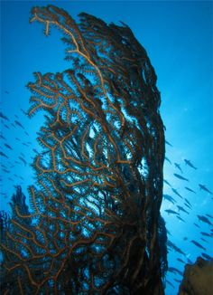 1° Premio Categoria Ambiente Foto di Manuel Pedro Carmenate Martinez